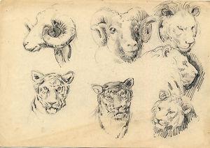 Dibujo a lápiz. Fauna salvaje.Posible J.Albareda