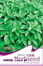 1 Pack 50 Seeds Sweet Basil Seed Ocimum Gratissimum D008